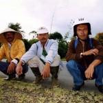 Three Musketeers! Kayuaro on Sumatra. Indonesia.