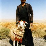 Shepherd with his favourite sheep. Syria.