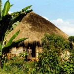 South of Dila. Ethiopia.