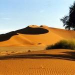 Namib Naukluft Park. Namibia.